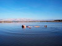ים המלח / צלם: רויטרס